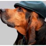 Radar Pet: animais desaparecidos viram série na Nat Geo